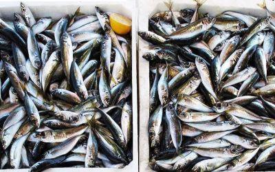 Beneficios y cualidades nutricionales de las anchoas